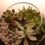 Succulent Garden Succulents Garden, Living Spaces, Terrariums, Plants, Design, Terrarium, Plant, Design Comics, Planting