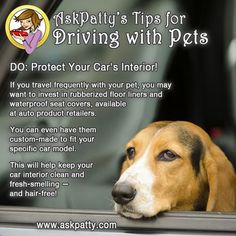 AP-Tips-for-Driving-with-Pets-9