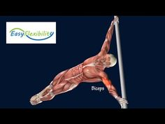 How To Human Flag Progression Tutorial Muscle Animation EasyFlexibility - YouTube