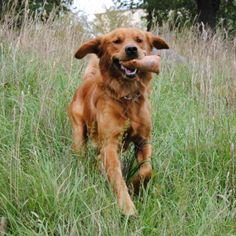 6 tips til aktivisering av hunden - Agria Dyreforsikring