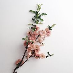 This is J | flora | thisisj.com | floral inspiration | bloom