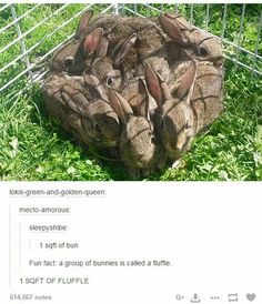 one square foot of bunnies. Doubt it is really called a fluffle,that's just too cute