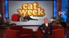 Ellen shares funny cat videos on the third day of Cat Week on her show. Funny Cat Photos, Funny Cat Videos, Funny Cats, Just For Gags, Tv Shows Funny, Funny Commercials, Dog Clip, Show Video, Cute Animal Videos