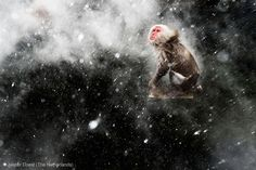 15 Award-Winning Photos From The Wildlife Photographer of the Year 2013 | Bored Panda