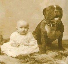 Vintage photo: pit bulls as nanny dogs. I believe.