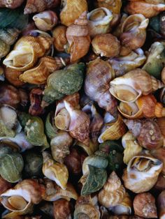 Whelks on Sale at a Seafood Market, Treguier, Brittany, France By: Jean-Bernard Carillet Escargot Recipe, Lake Superior Agates, Seafood Market, Brittany France, Grazing Tables, Still Life Photos, Natural Texture, Under The Sea, Sea Shells