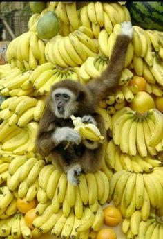 ENDANGERED: Gibbon, someone hit the jackpot