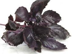 Basil - Dark Purple Opal: should try for herb garden