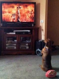 TOP 35 Funny Dogs Pictures | #Funny #dogs
