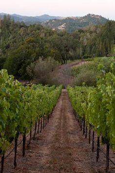 Vineyards - Knighton Family Vineyards