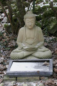 Zen in the backyard