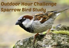 Outdoor Hour Challenge – Where Are the Sparrows? Novelty Motorcycle Helmets, Novelty Helmets, Novelty Hats, Novelty License Plates, Novelty Items, Novelty Store, Sparrow Bird, Novelty Fabric, Nature Study