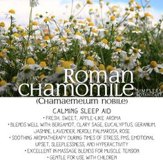 Roman Chamomile Essential Oil (Chamaemelum nobile)  • Calming sleep aid • Fresh, sweet, apple-like aroma • Blends well with: bergamot, clary sage, eucalyptus, jasmine, lavender, neroli, palmarosa, rose • Soothing aromatherapy during times of stress, PMS, emotional upset, sleeplessness, and hyperactivity • Excellent in massage blends for muscle tension • Gentle for use with children Essential Oils For Colds, Chamomile Essential Oil, Young Living Essential Oils, Holistic Healing, Natural Healing, Doterra Roman Chamomile, Green Apple Recipes, Doterra Oils, Oil Uses