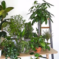 Guia Westwing: Urban Jungle - You are in the right place about diy face mask sewing pattern Here we offer you the most beautiful - House Plants Decor, Plant Decor, Ivy Plants, Indoor Plants, Palm Plants, Foliage Plants, Hanging Plants, Tropical Decor, Tropical Garden