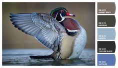 Wood Duck paint colors by Sherwin-Williams