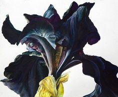 Iris series 10