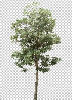 This PNG image was uploaded on January am by user: bogdyypop and is about Autumn Tree, Branch, Christmas Tree, Computer Graphics, Data.