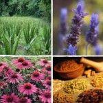 Bylinky, koreniny a potraviny s antibiotickým účinkom