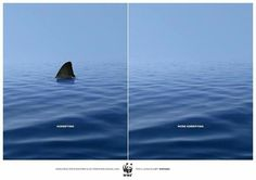 Sharks, love them but respect them!!