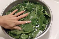 Like other dark green, leafy vegetables, spinach is a nutritional powerhouse. Because all methods of cooking destroy some nutritional value, the best way to maximize nutrient intake is to eat fresh spinach raw. Cook Fresh Spinach, How To Make Spinach, Cooking Tuna Steaks, Cooking Pork Roast, How To Cook Greens, How To Cook Ham, Cooking Panda, Cooking Wine, Cooking Barley