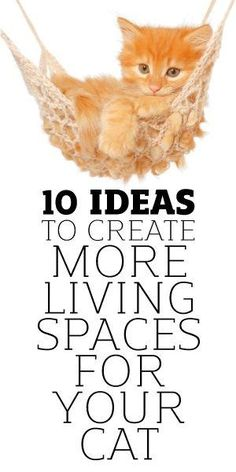 10 Ideas To Creating More Living Spaces For Your Cat by eddie