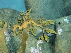 Underwater Ocean Sea Life