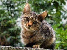 kitty by epatlis