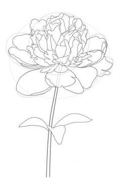 pfingstrose zeichnen blumen zeichnung, pin by geysa mazzini on riscos   pinterest, Design ideen