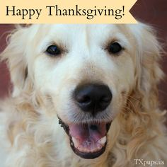 Happy Thanksgiving! Thanksgiving is a time to say thanks and be grateful, what are you thankful for this year?