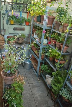 The Magic Garden~My small space container garden: Hello Secret Garden! Small Space Gardening, Garden Spaces, Balcony Garden, Small Gardens, Garden Beds, Outdoor Gardens, Indoor Garden, Bristol, Magic Garden