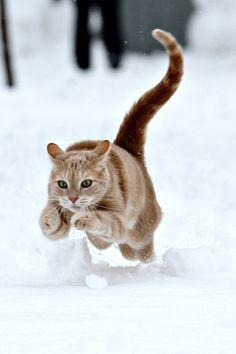 cat on the run
