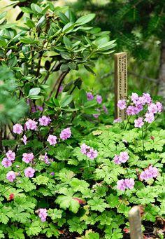 Botanical Gardens, Herbs, Flowers, Green, Plants, Beautiful Gardens, Gardening, Life, Lawn And Garden
