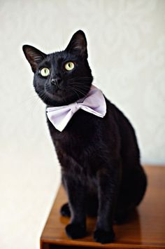 Wedding Bow Ties | Cat Wedding Bow Tie