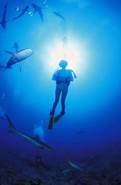 Scuba diving... with sharks...