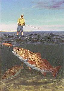 Golden Opportunity Fish Wall Art Fishing 101, Fishing Tricks, Bass Fishing, Underwater Drawing, Underwater Fish, Fish Artwork, Fish Wall Art, Salt Water Fish, Prophetic Art