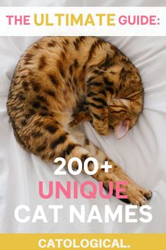 Excited to welcome a new kitten into your family? Use this list of 200 unique kitten names to help you find the purrfect fit for your unique cat! Kitten Names Girl, Grey Cat Names, Cute Cat Names, Unique Cat Names, Unique Cats, Kittens Cutest, Cats And Kittens, Funny Kittens, Black Kittens
