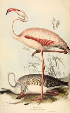 Rare set of John Gould's bird books for sale – in pictures