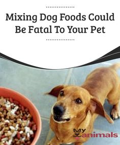 Mixing Dog Foods Could Be Fatal To Your Pet   When our dogs seem bored with dry food or kibble, many of us choose to mix it with a bit of ham or chicken. Or, we try any old stew we've made, to make it easier to vary our pets' diets. Butm did you know that mixing dog foods is actually dangerous for your pet?