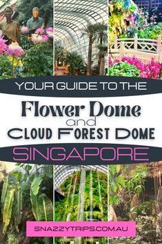 The Enchanting Cloud Forest Dome And Flower Dome In Singapore 8 Beautiful Places To Visit, Cool Places To Visit, Places To Travel, Amazing Places, Luang Prabang, Amazing Destinations, Travel Destinations, Laos, Tropical Heat