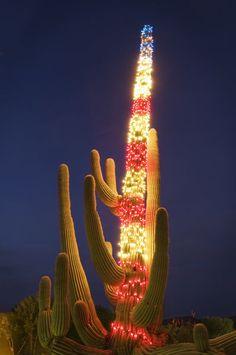 Usa Arizona Saguaro Cactus At Christmas Places ☆ Spaces