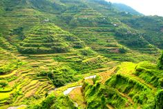 The top 10 places for viewing rice terraces . . . #3: Banaue, Philippines