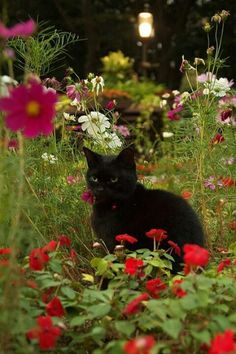 """Summer flowers and a black cat - reminds me of my darlilng Bosco who loved to walk in the backyard. Чёрный кот в """"Космосе"""" I Love Cats, Big Cats, Cute Cats, Crazy Cat Lady, Crazy Cats, Kittens Cutest, Cats And Kittens, Ragdoll Kittens, Funny Kittens"""
