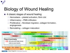 4 Stages of Wound Healing     | Vet | Wound care, Wound healing