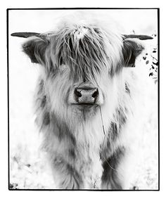 #ko #gödsel #cow #bullshit #manure #ewamarierundquist