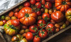 Colorful tomatoes of different sizes. Food & Drink Photos