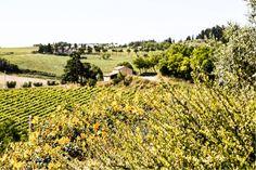 Die Weinberge von Tenuta Neri