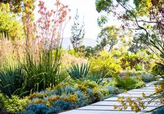 The Planthunter – Australian Dreamscapes: The Art of Gardening