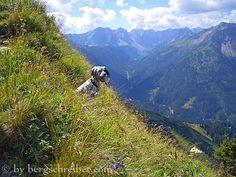 English Setter, Mountains, Nature, Travel, Hiking, Dogs, Naturaleza, Trips, Viajes