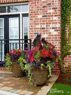 container gardening - beautiful combination!