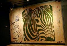 A moss zebra